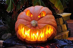 carving k rbisschnitzen anleitung zur riesenk rbiszucht big pumpkins ag s und riesengem se. Black Bedroom Furniture Sets. Home Design Ideas